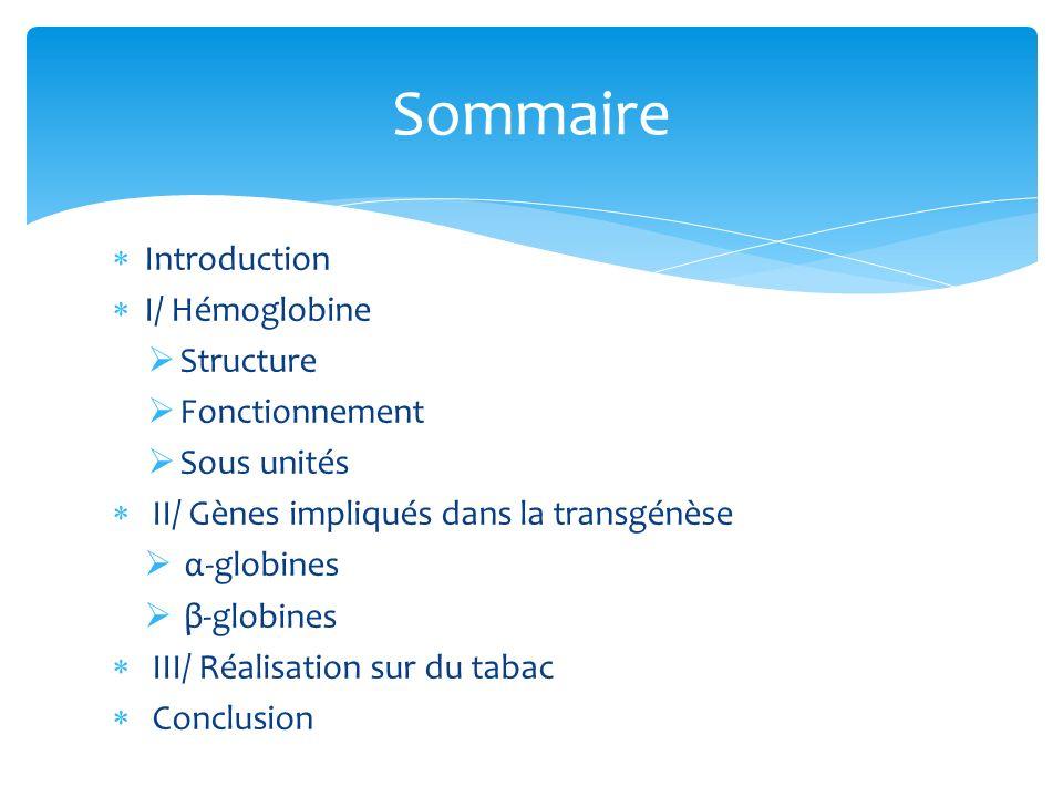 Sommaire Introduction I/ Hémoglobine Structure Fonctionnement
