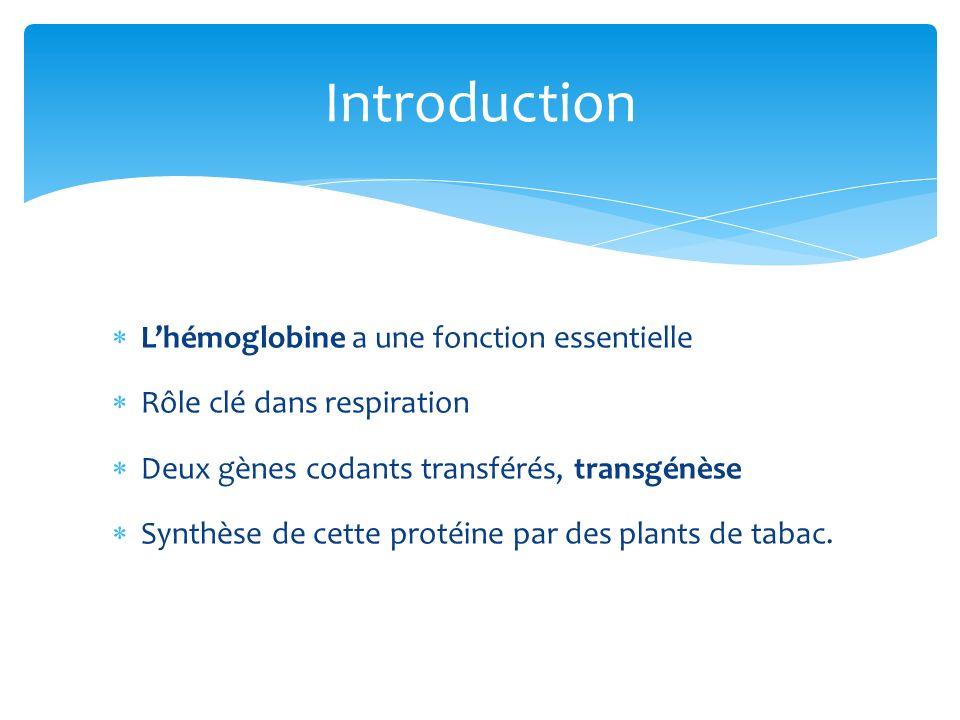 Introduction L'hémoglobine a une fonction essentielle