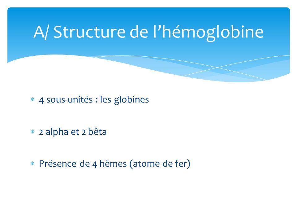 A/ Structure de l'hémoglobine