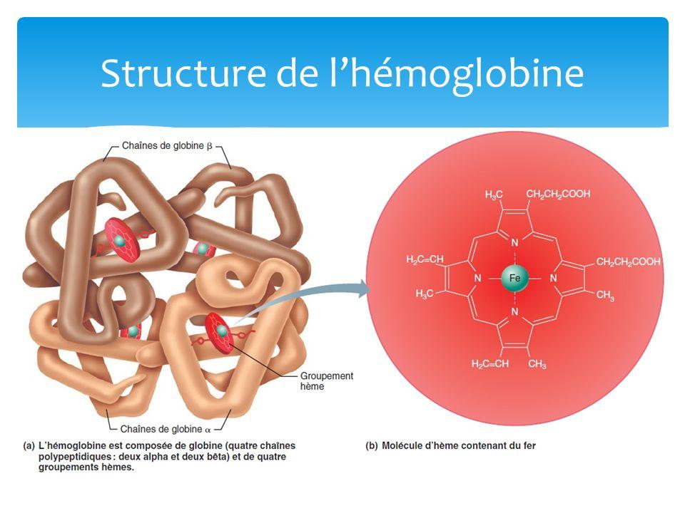 Structure de l'hémoglobine