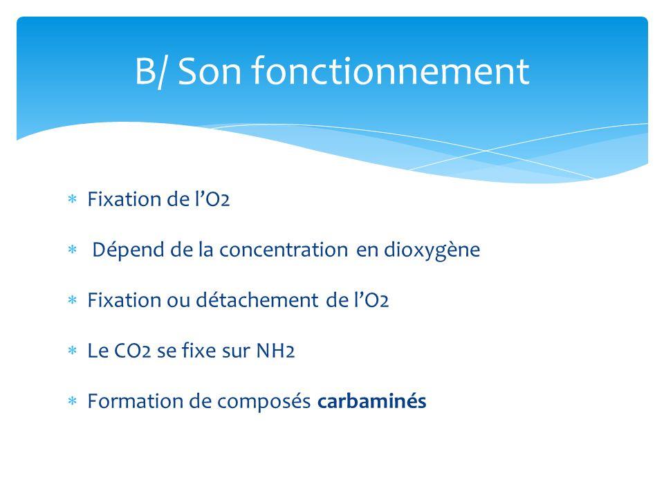 B/ Son fonctionnement Fixation de l'O2