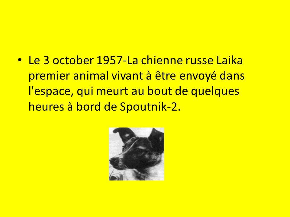 Le 3 october 1957-La chienne russe Laika premier animal vivant à être envoyé dans l espace, qui meurt au bout de quelques heures à bord de Spoutnik-2.
