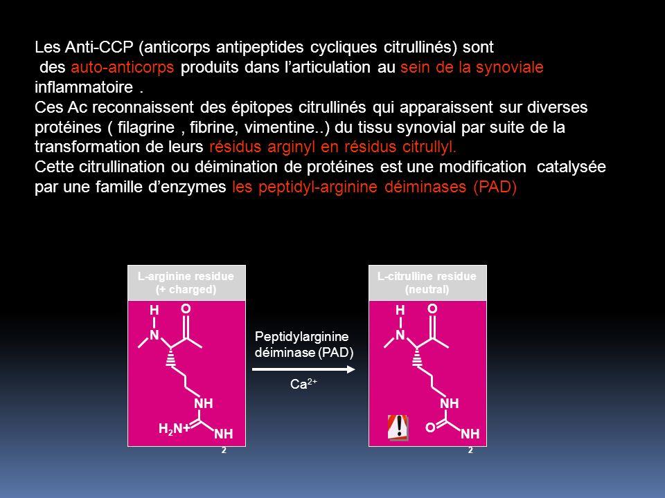 Peptidylarginine déiminase (PAD)