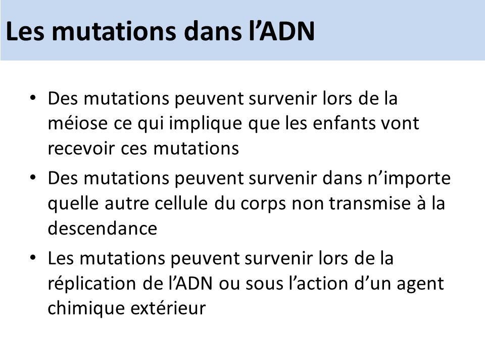 Les mutations dans l'ADN