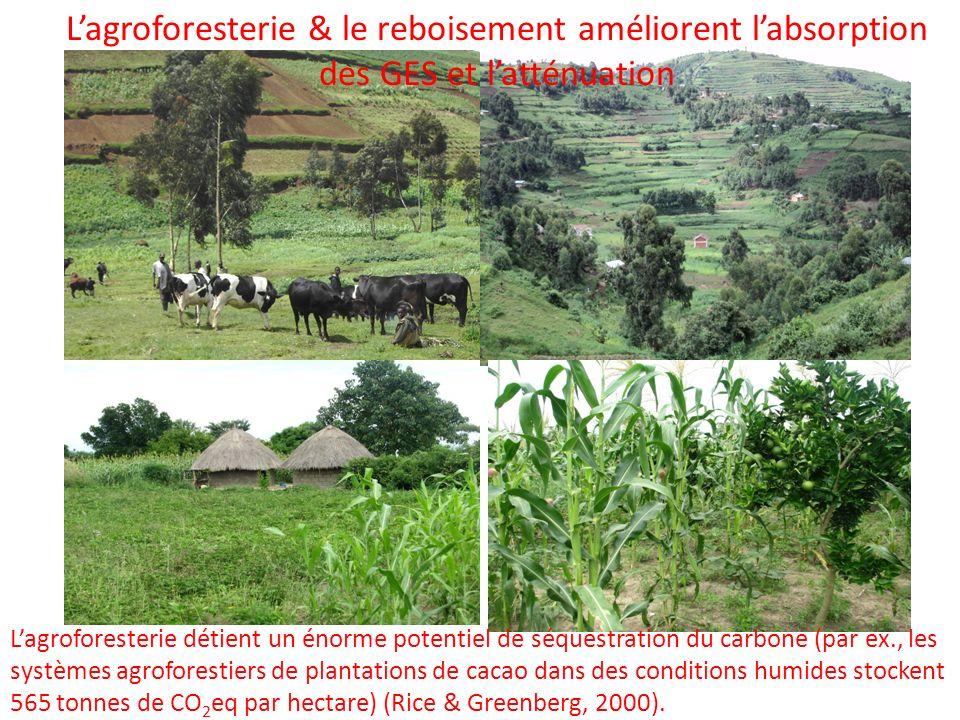 L'agroforesterie & le reboisement améliorent l'absorption des GES et l'atténuation
