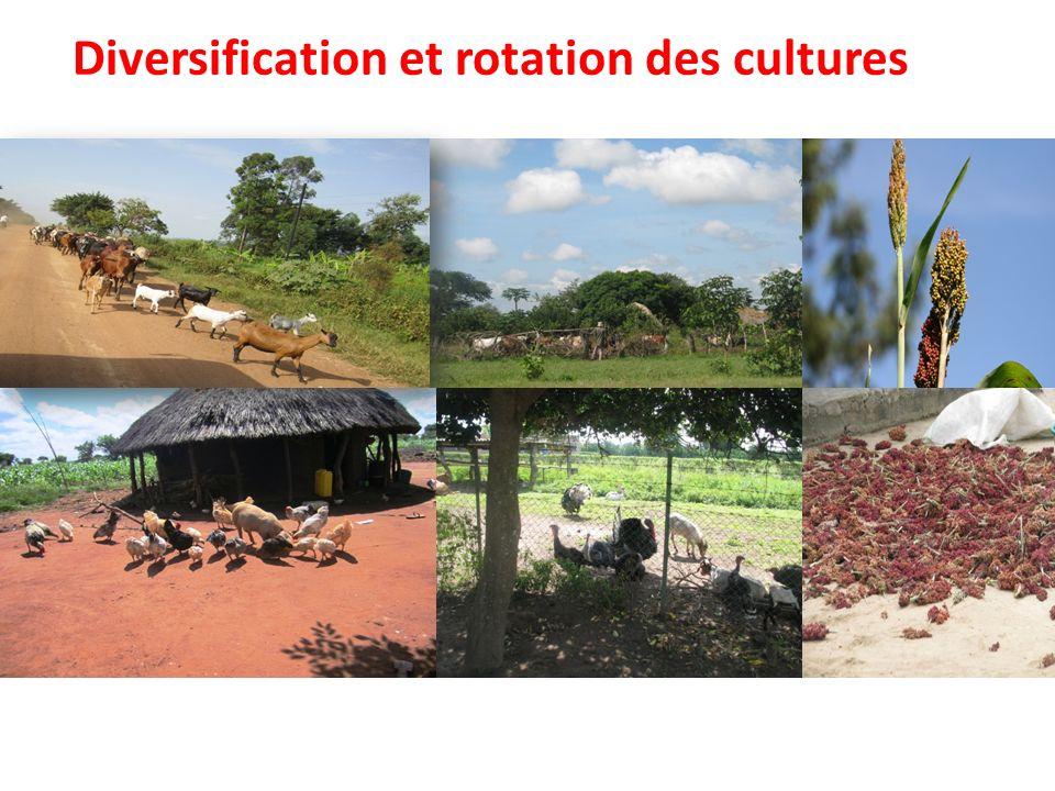 Diversification et rotation des cultures