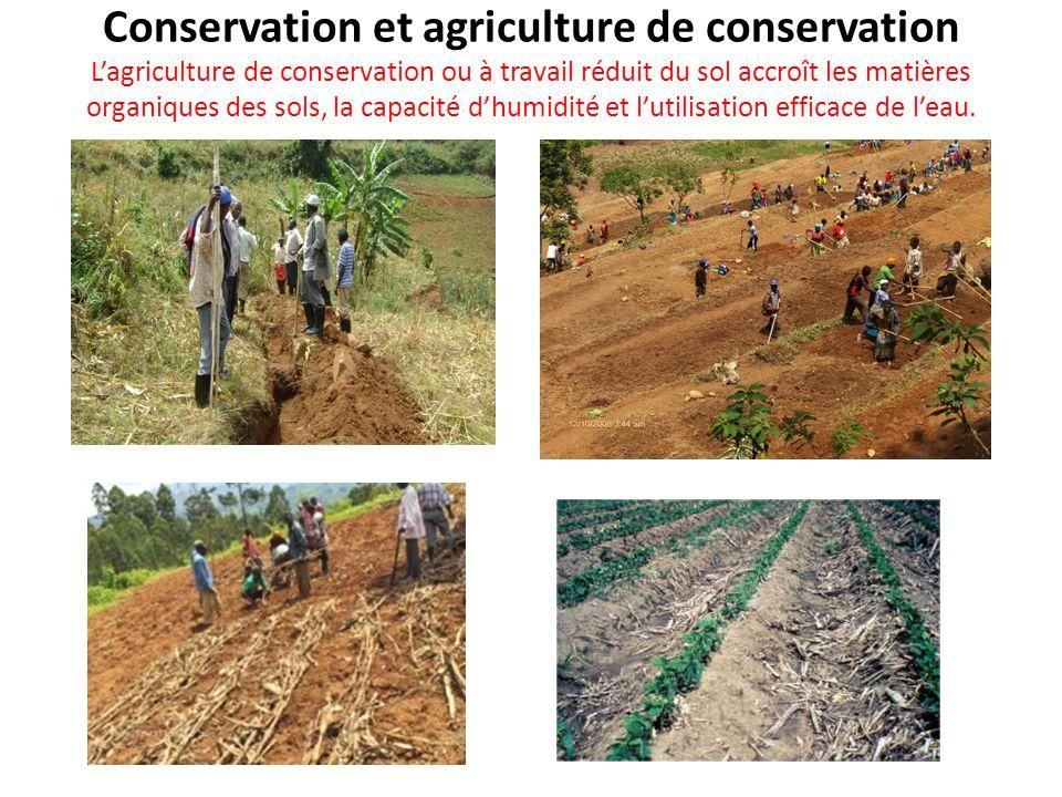 Conservation et agriculture de conservation L'agriculture de conservation ou à travail réduit du sol accroît les matières organiques des sols, la capacité d'humidité et l'utilisation efficace de l'eau.