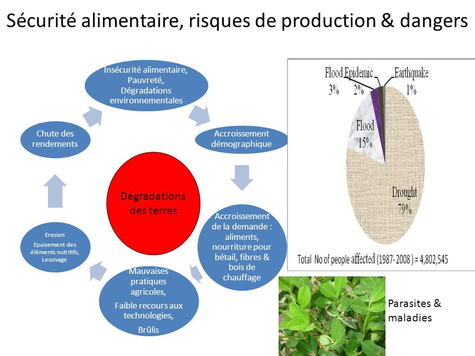 Sécurité alimentaire, risques de production & dangers
