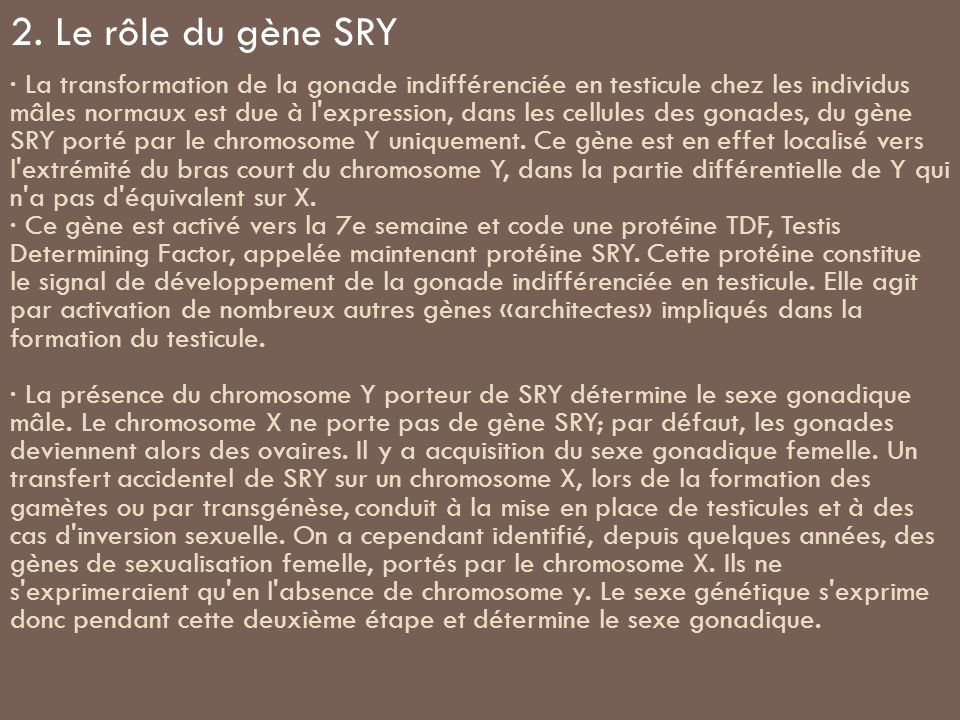 2. Le rôle du gène SRY