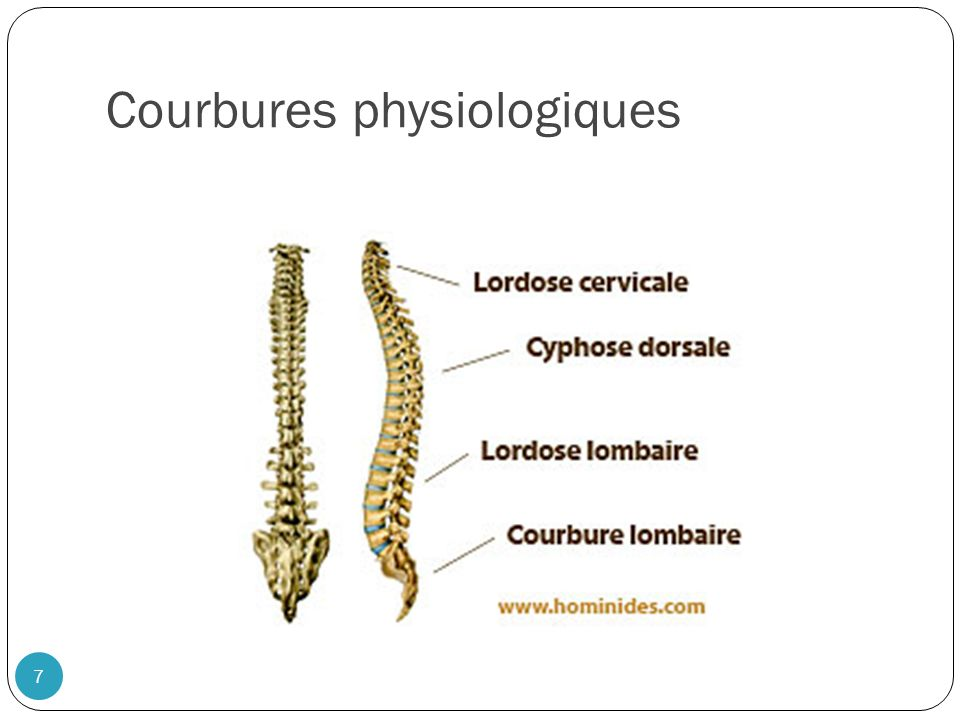 Courbures physiologiques
