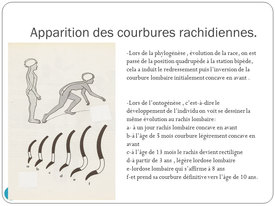 Apparition des courbures rachidiennes.
