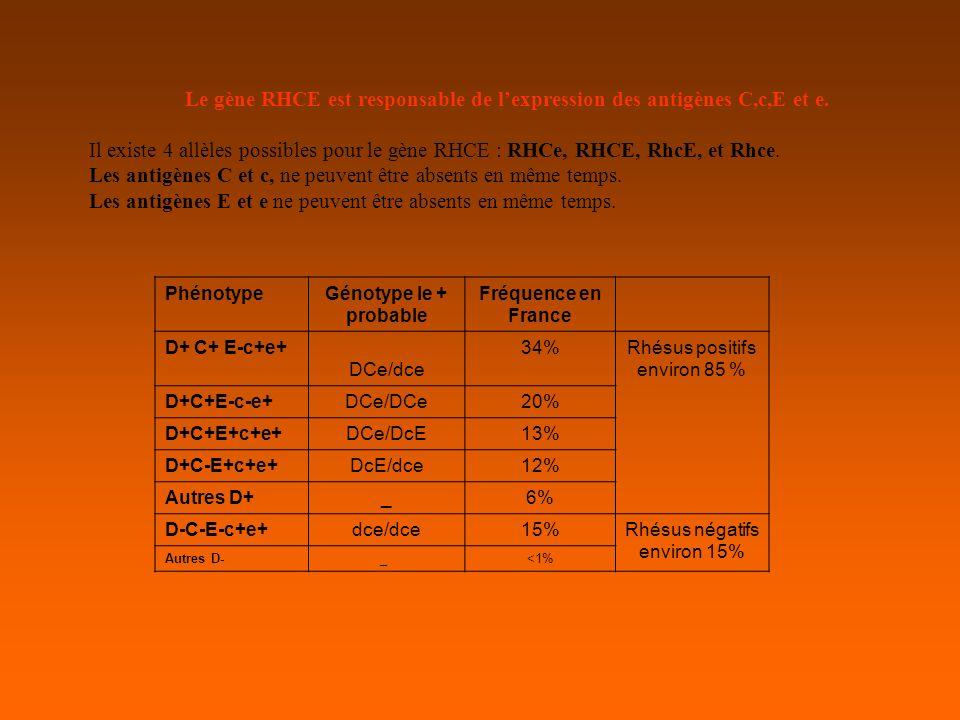 Le gène RHCE est responsable de l'expression des antigènes C,c,E et e.