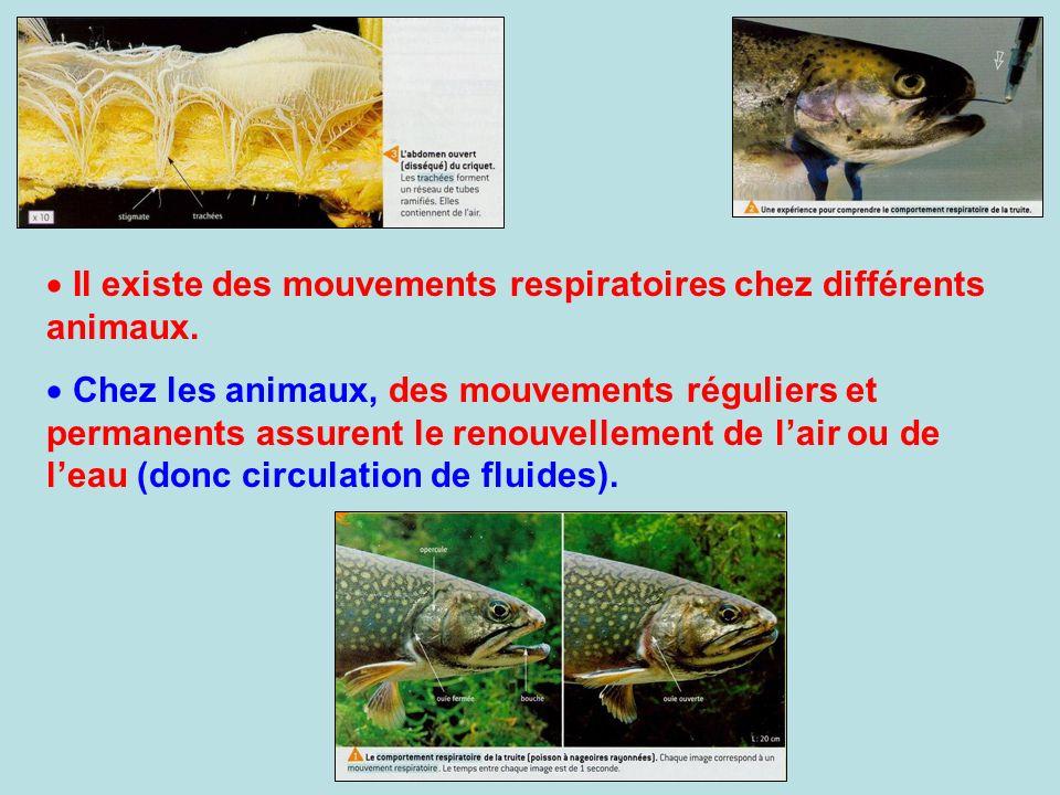 Il existe des mouvements respiratoires chez différents animaux.
