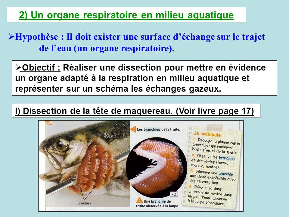 2) Un organe respiratoire en milieu aquatique