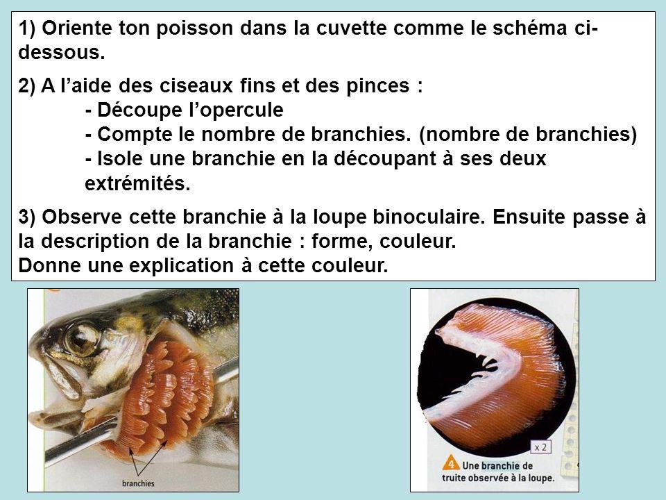 1) Oriente ton poisson dans la cuvette comme le schéma ci-dessous.