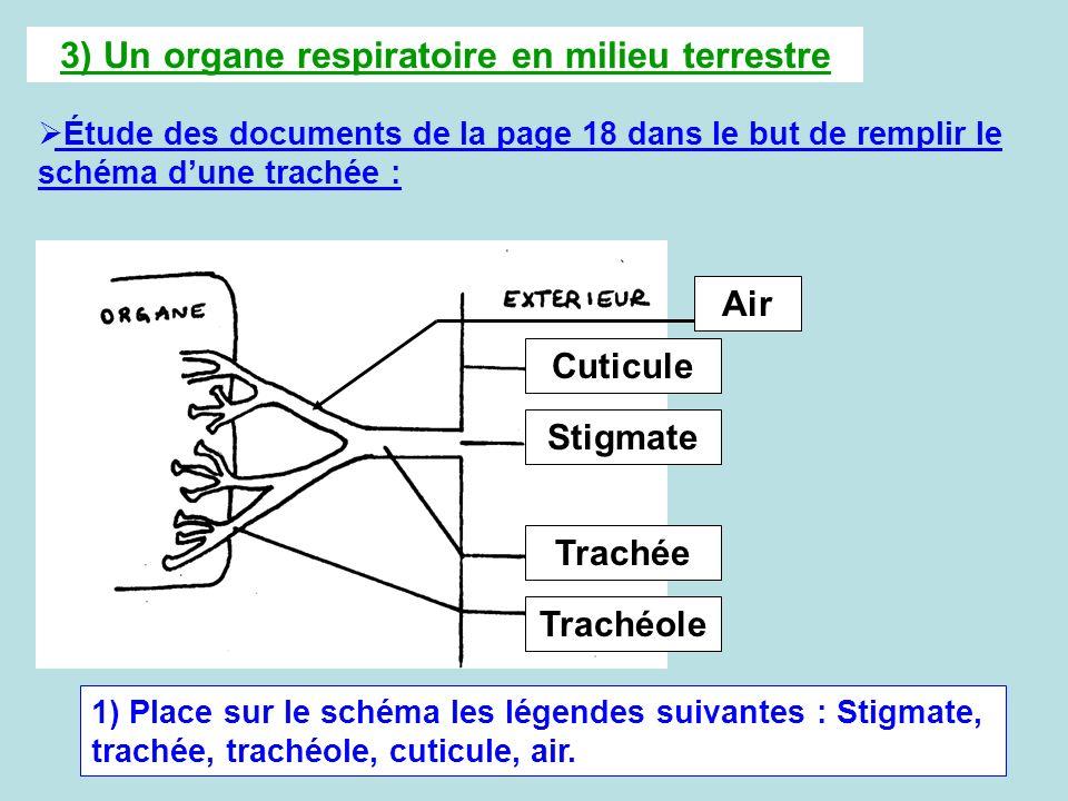 3) Un organe respiratoire en milieu terrestre