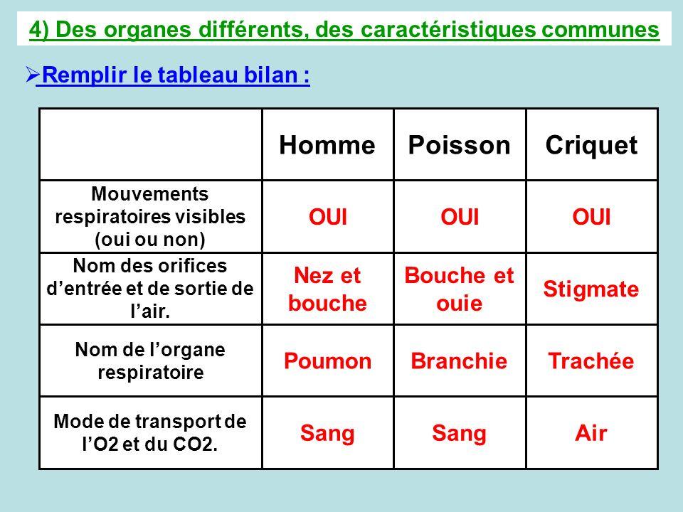 4) Des organes différents, des caractéristiques communes