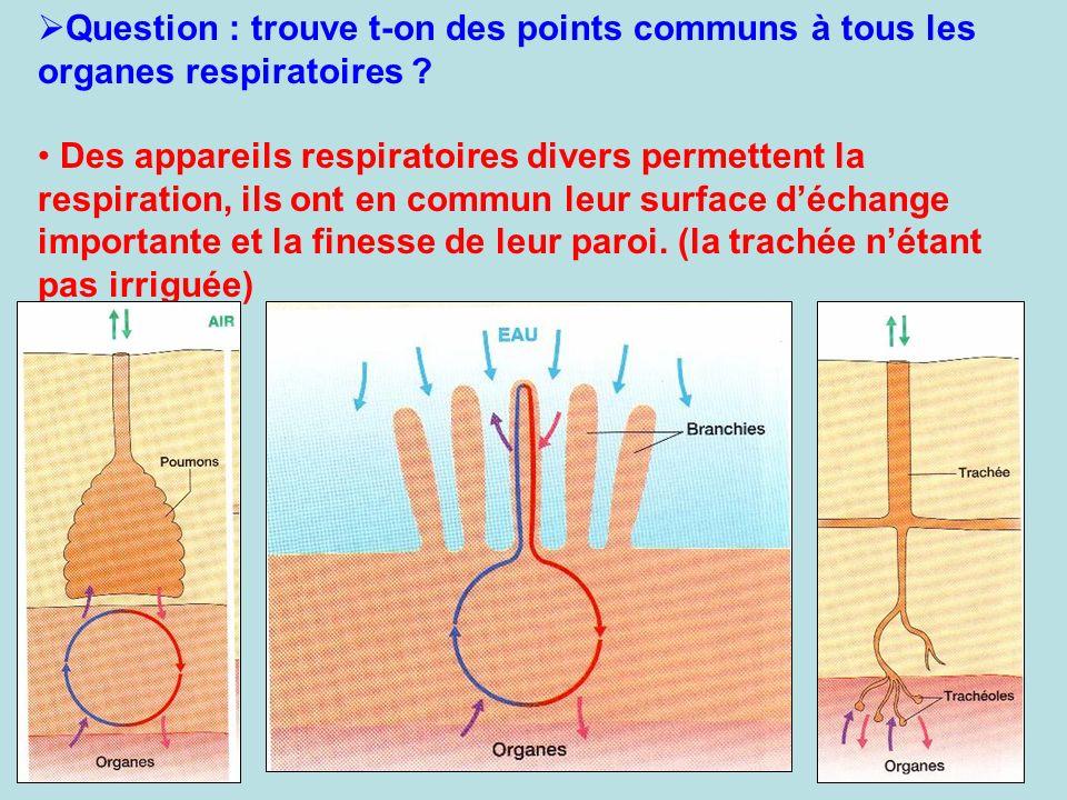 Question : trouve t-on des points communs à tous les organes respiratoires