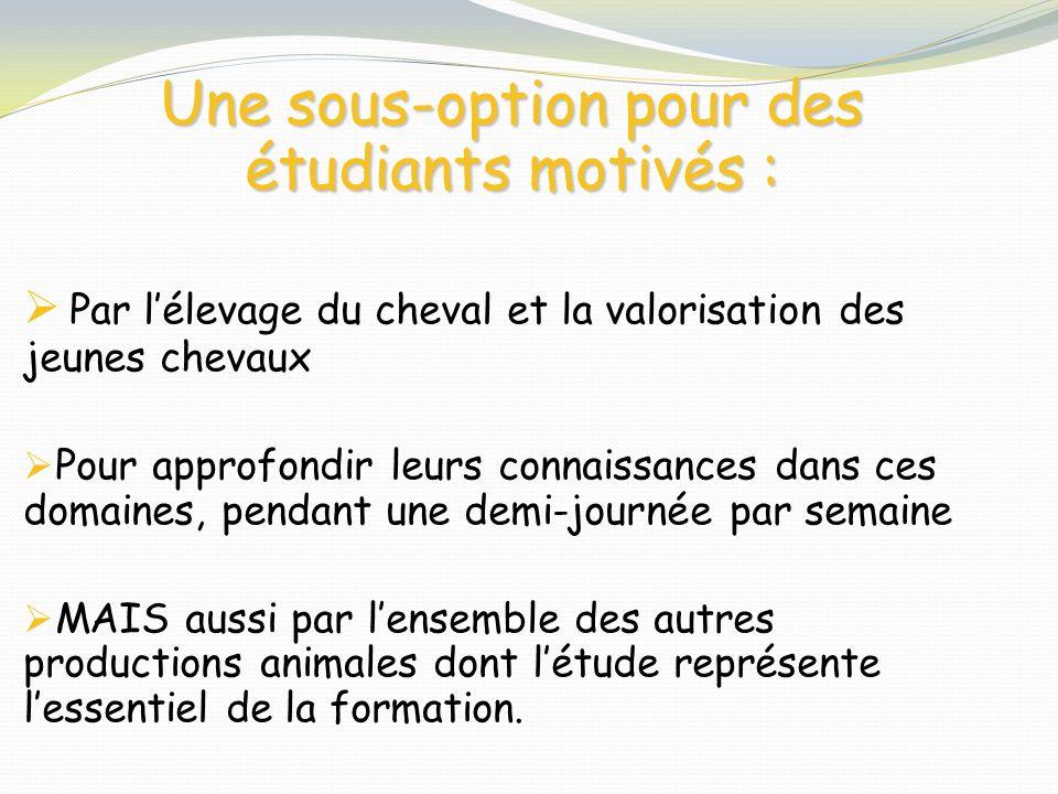 Une sous-option pour des étudiants motivés :