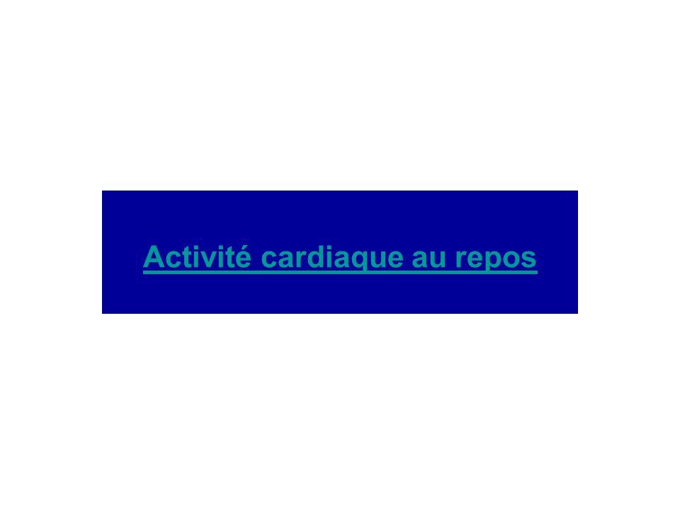 Activité cardiaque au repos