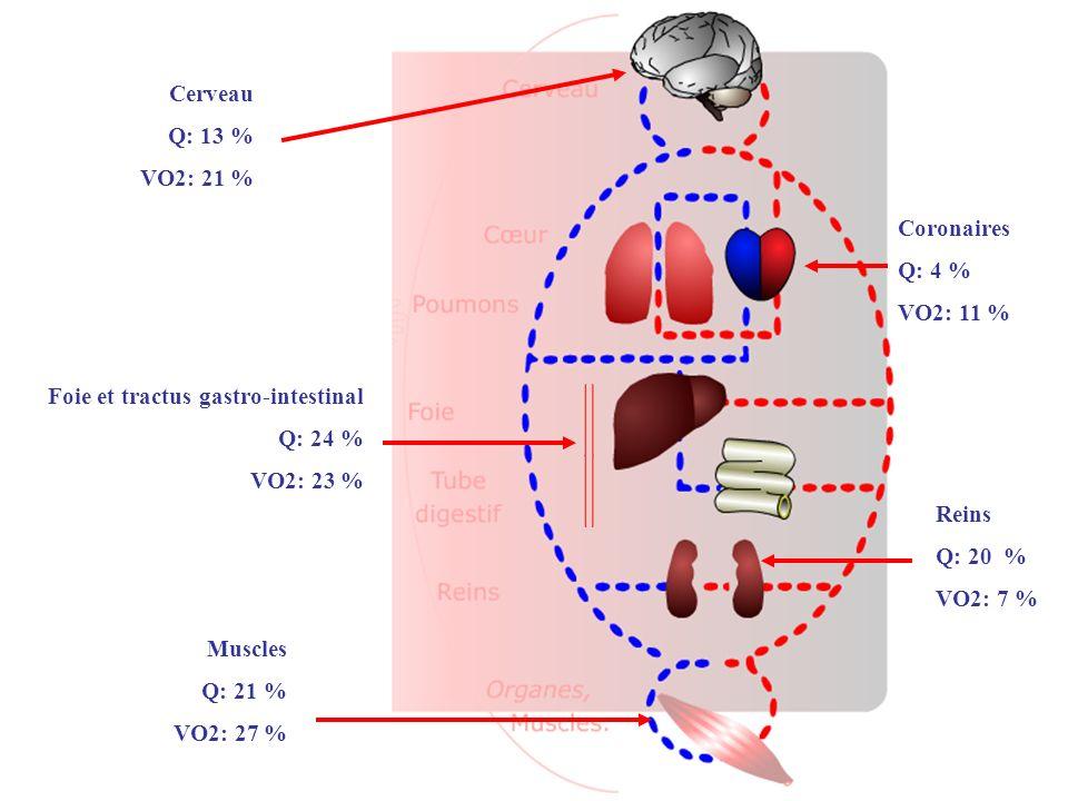 Cerveau Q: 13 % VO2: 21 % Coronaires. Q: 4 % VO2: 11 % Foie et tractus gastro-intestinal. Q: 24 %
