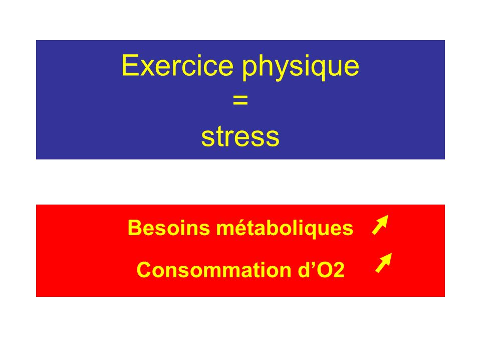 Exercice physique = stress