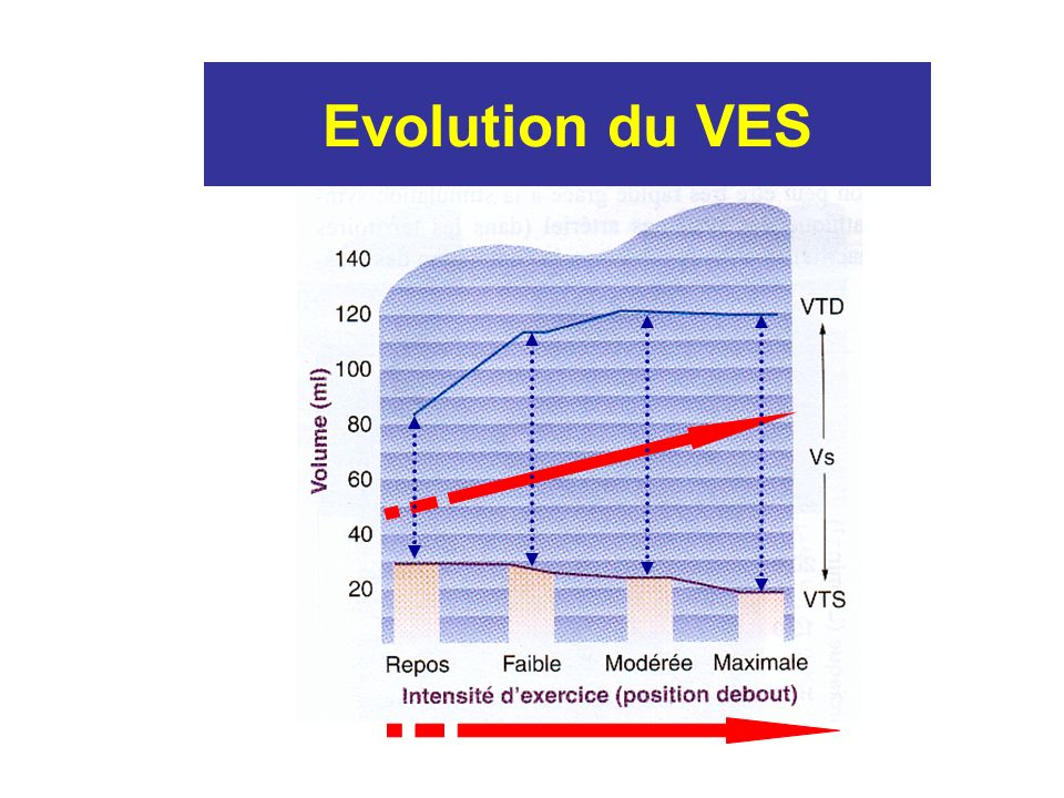 Evolution du VES