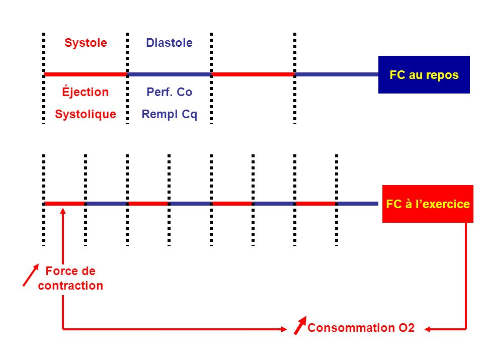 Systole FC au repos. Diastole. Éjection. Systolique. Perf. Co. Rempl Cq. FC à l'exercice. Force de contraction.
