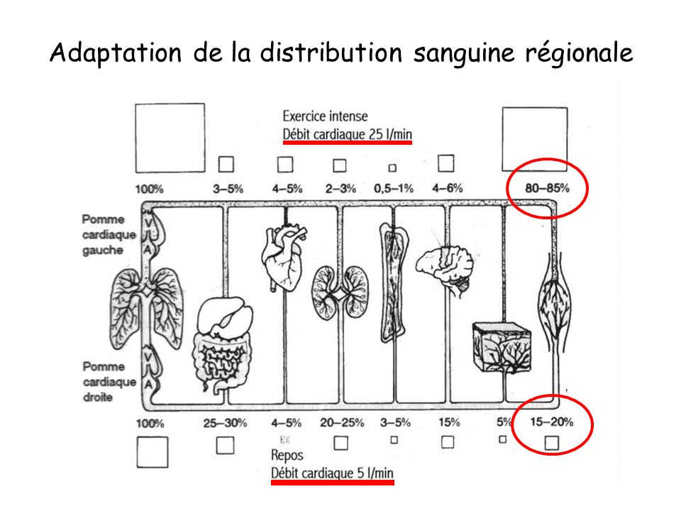 Adaptation de la distribution sanguine régionale