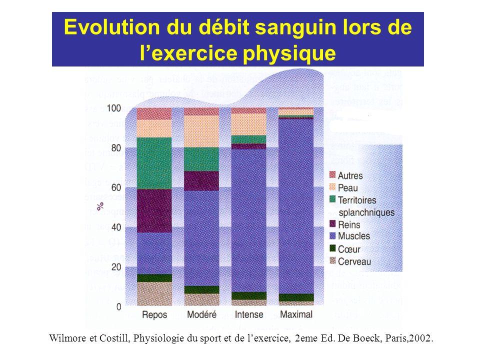 Evolution du débit sanguin lors de l'exercice physique