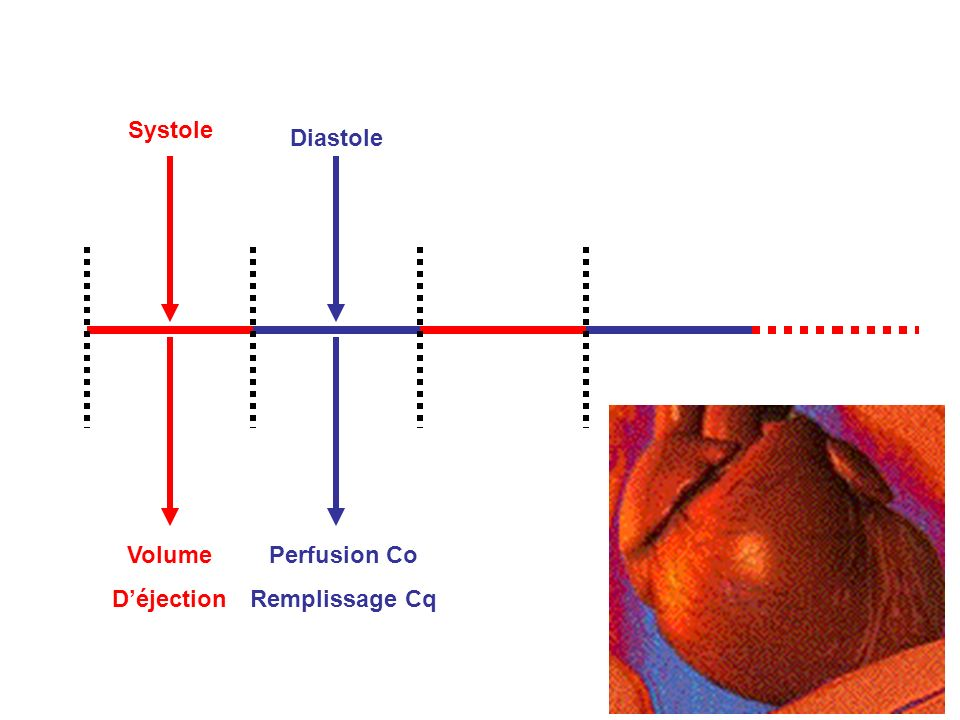 Systole Diastole Perfusion Co Remplissage Cq Volume D'éjection