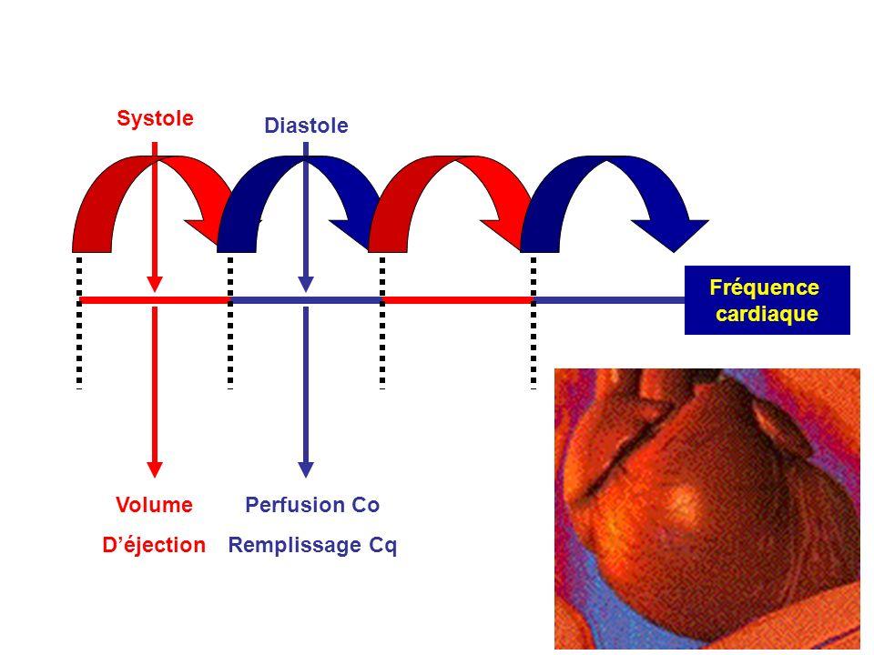 Systole Fréquence cardiaque Diastole Volume D'éjection Perfusion Co Remplissage Cq