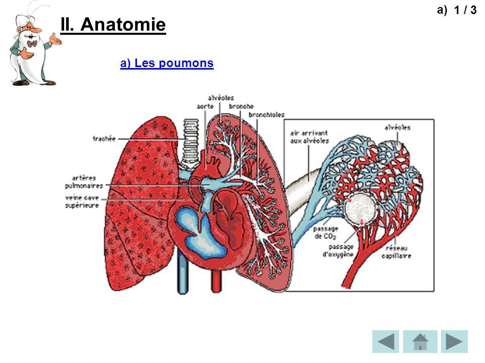 a) 1 / 3 II. Anatomie a) Les poumons