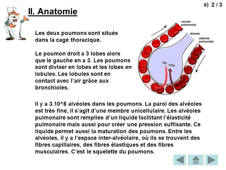 a) 2 / 3. II. Anatomie. Les deux poumons sont situés dans la cage thoracique.