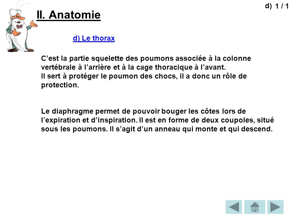 II. Anatomie d) 1 / 1 d) Le thorax