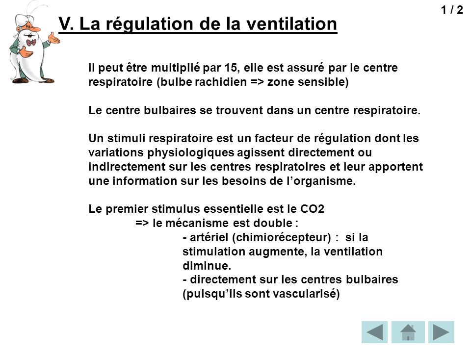 V. La régulation de la ventilation