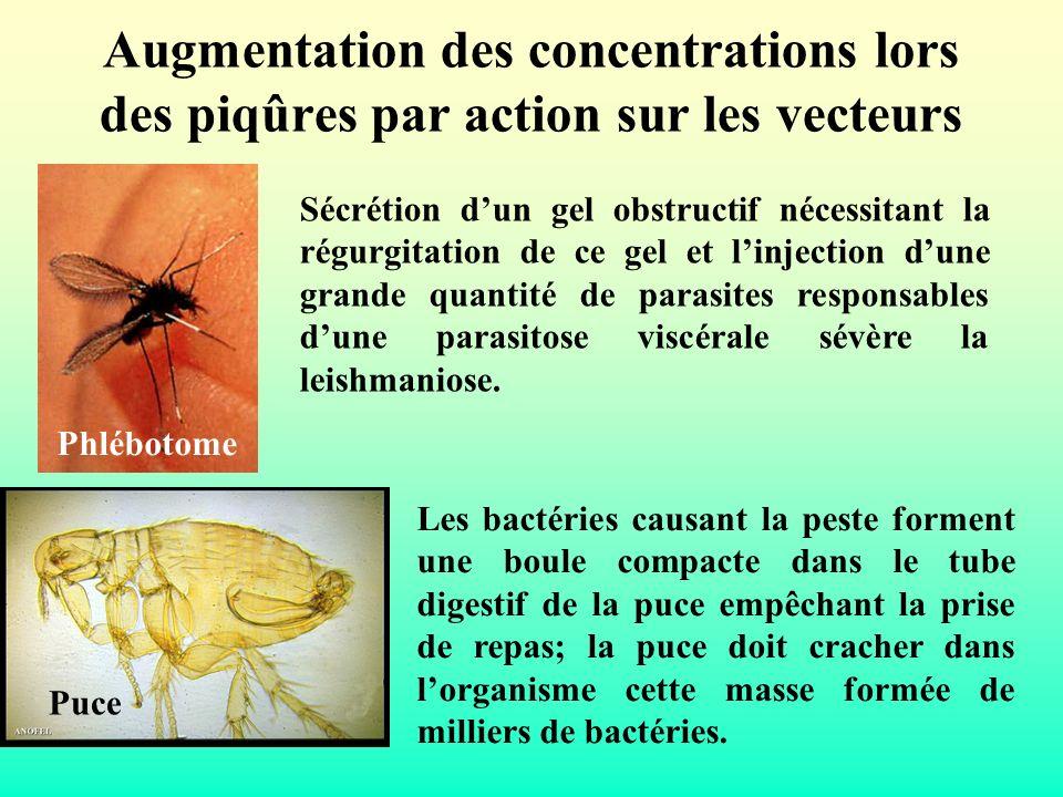 Augmentation des concentrations lors des piqûres par action sur les vecteurs