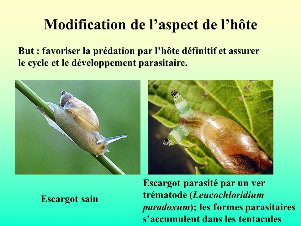 Modification de l'aspect de l'hôte