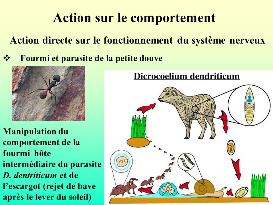 Action sur le comportement