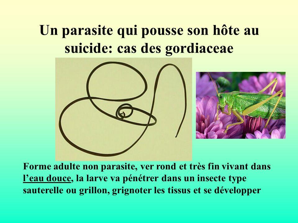 Un parasite qui pousse son hôte au suicide: cas des gordiaceae