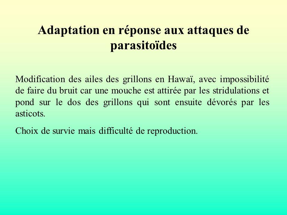 Adaptation en réponse aux attaques de parasitoïdes
