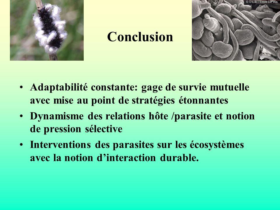 Conclusion Adaptabilité constante: gage de survie mutuelle avec mise au point de stratégies étonnantes.