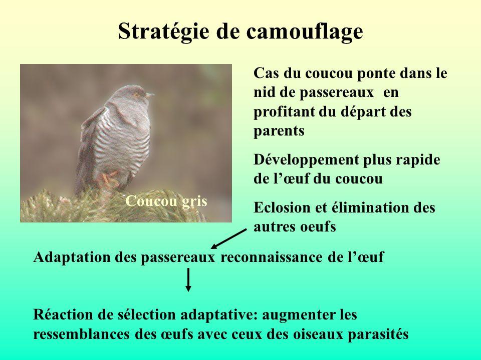 Stratégie de camouflage