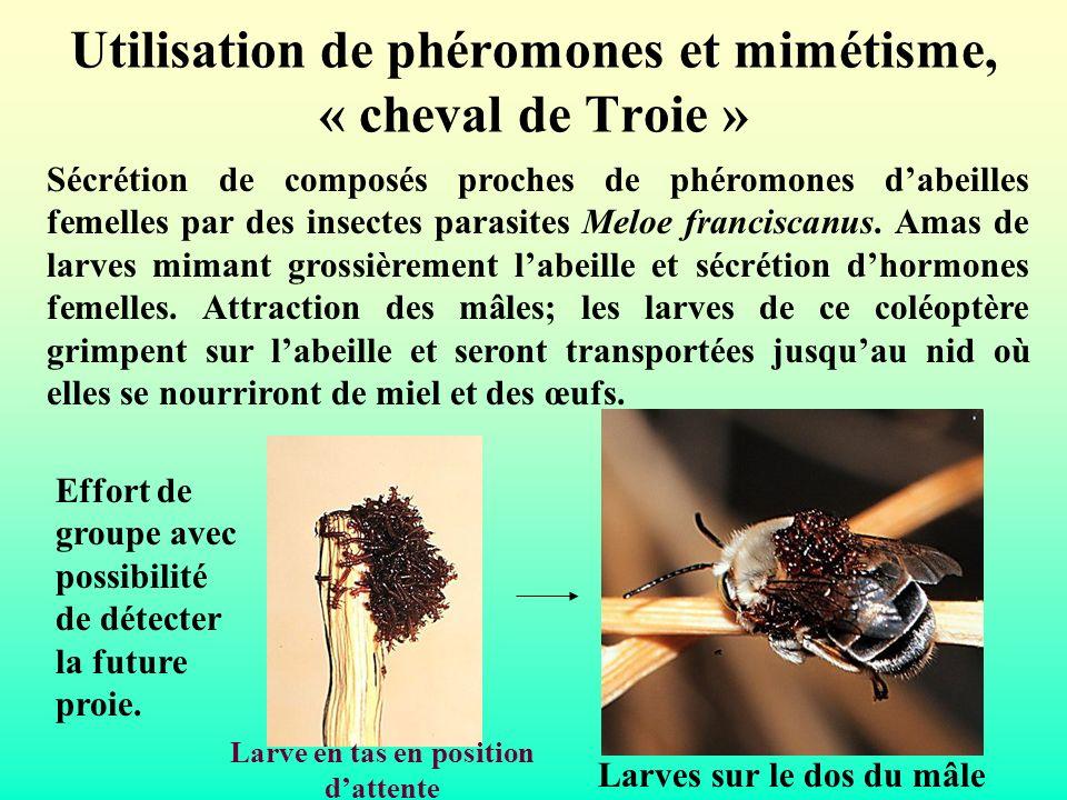 Utilisation de phéromones et mimétisme, « cheval de Troie »