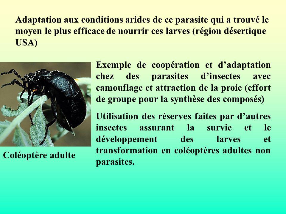Adaptation aux conditions arides de ce parasite qui a trouvé le moyen le plus efficace de nourrir ces larves (région désertique USA)