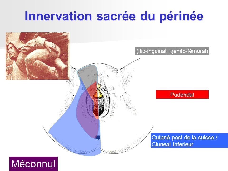 Innervation sacrée du périnée