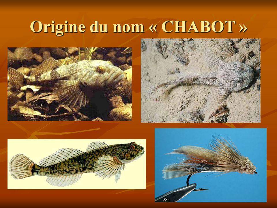 Origine du nom « CHABOT »