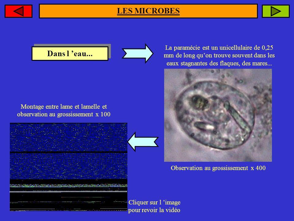 LES MICROBES Dans l 'eau...