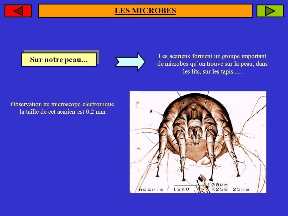 LES MICROBES Sur notre peau...
