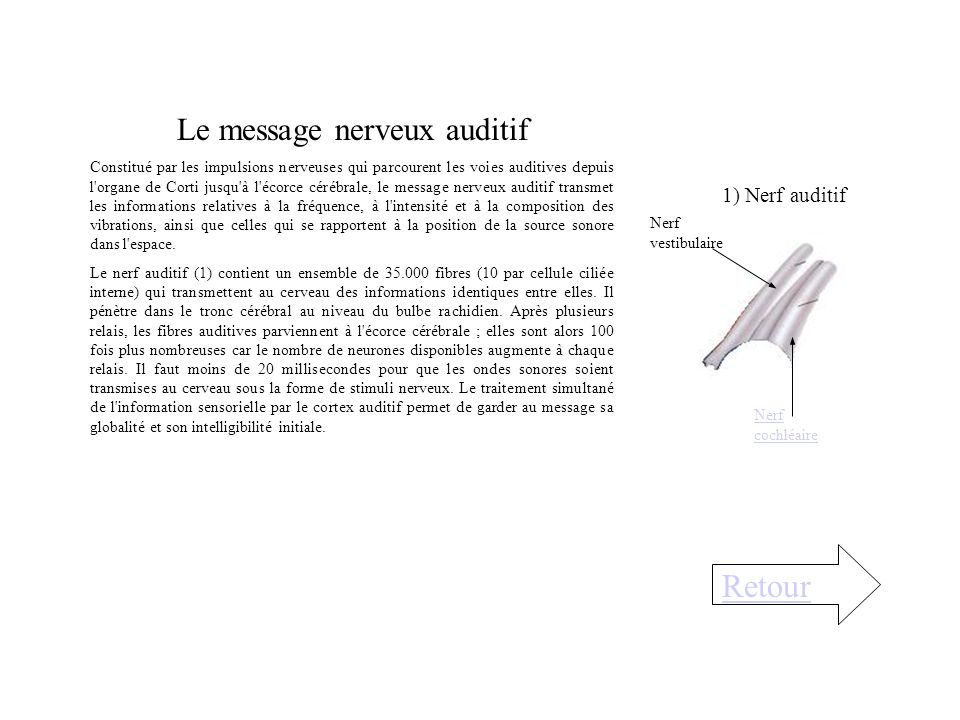 Le message nerveux auditif
